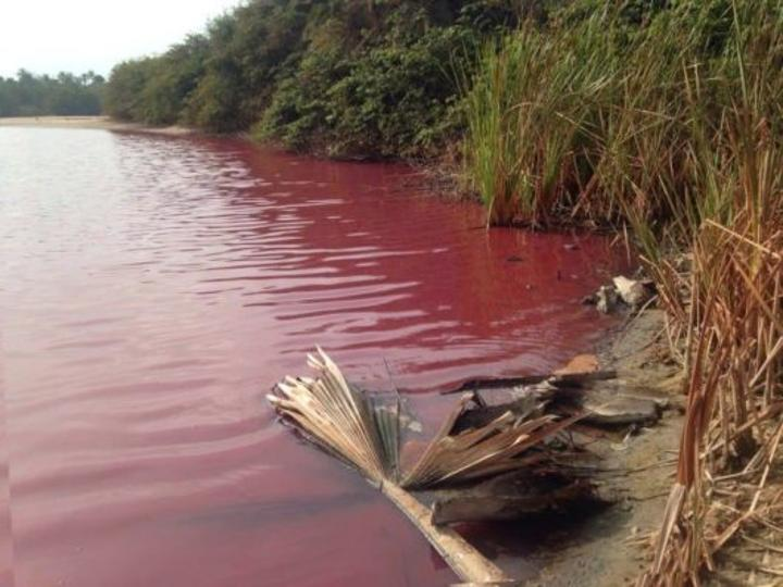 Gambian government must act now to stop environmental destruction in Gunjur