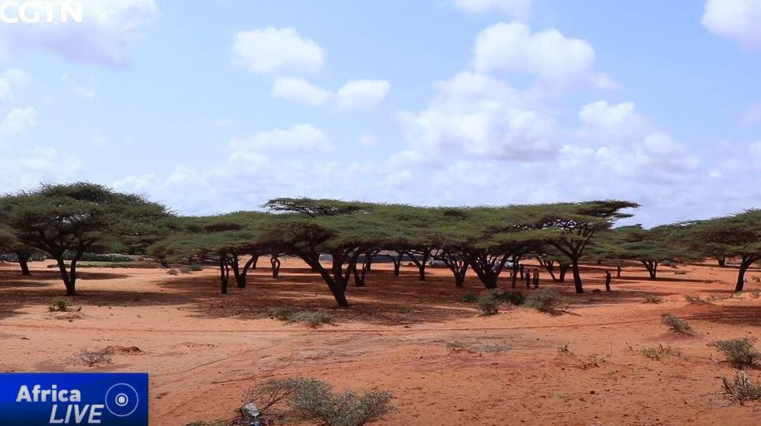قرية صومالية تحظر قطع الأشجار كوسيلة لحماية البيئة