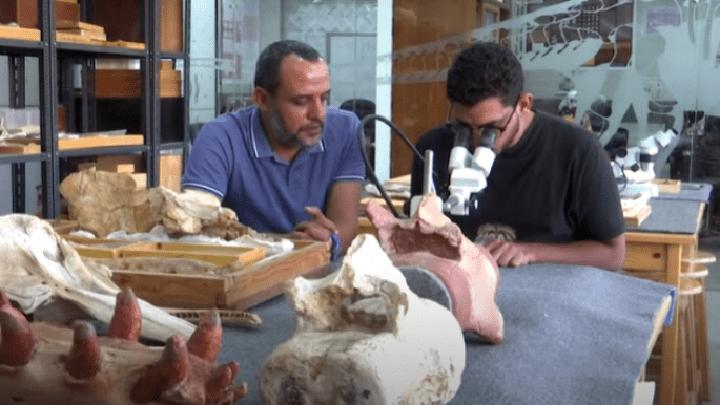 علماء: الحوت البرمائي المكتشف في مصر غير معروف سابقاً