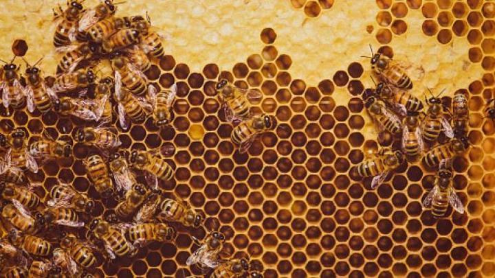 اكتشاف آثار إشعاع نووي في العسل الأميركي