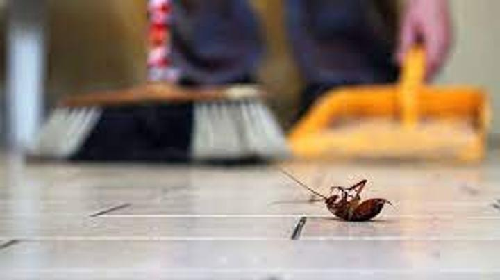 ثلاث حيل للقضاء على الحشرات المنزلية
