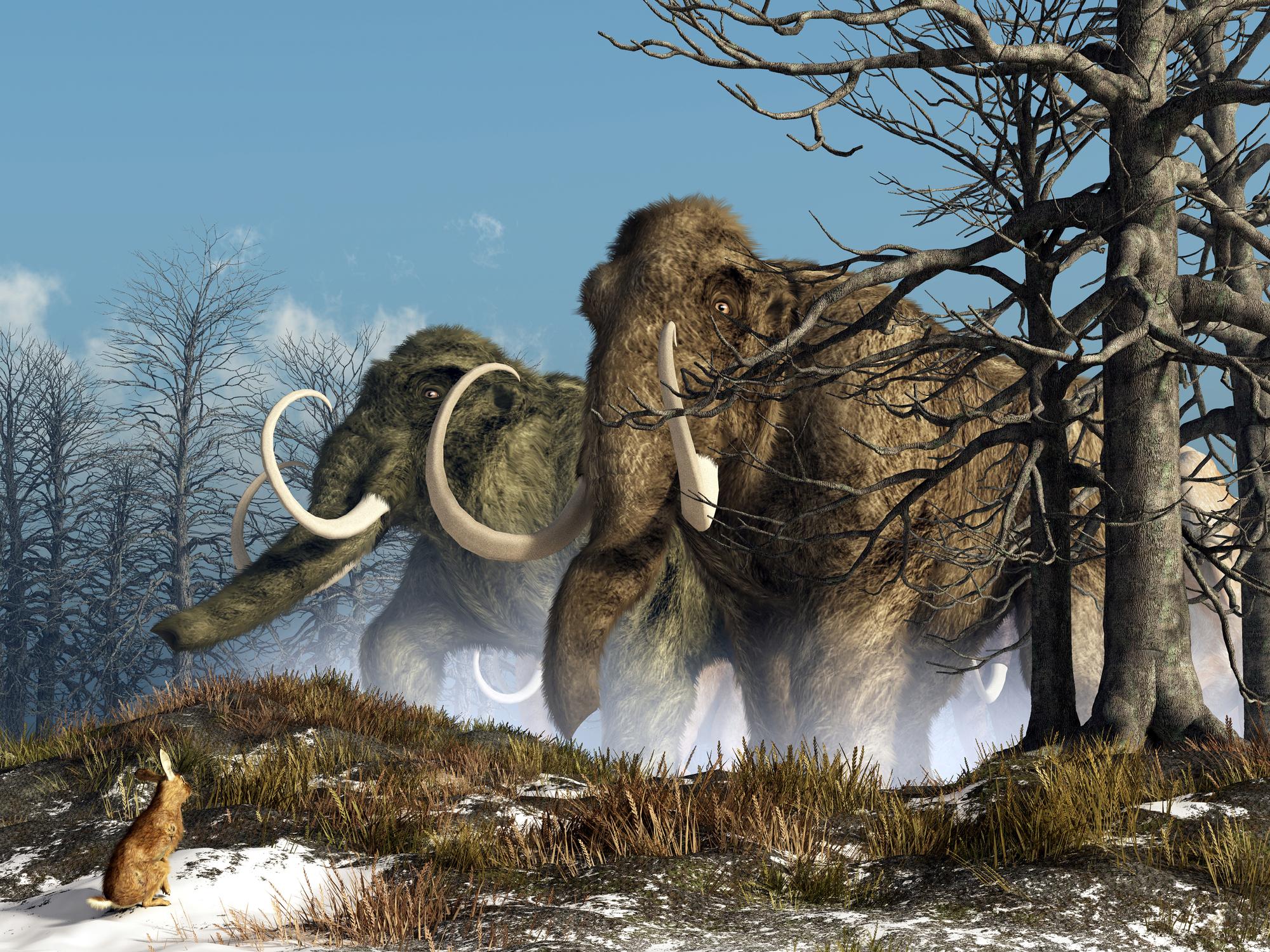 ثاني أكسيد الكربون: ما الذي حدث قبل 40 مليون سنة؟