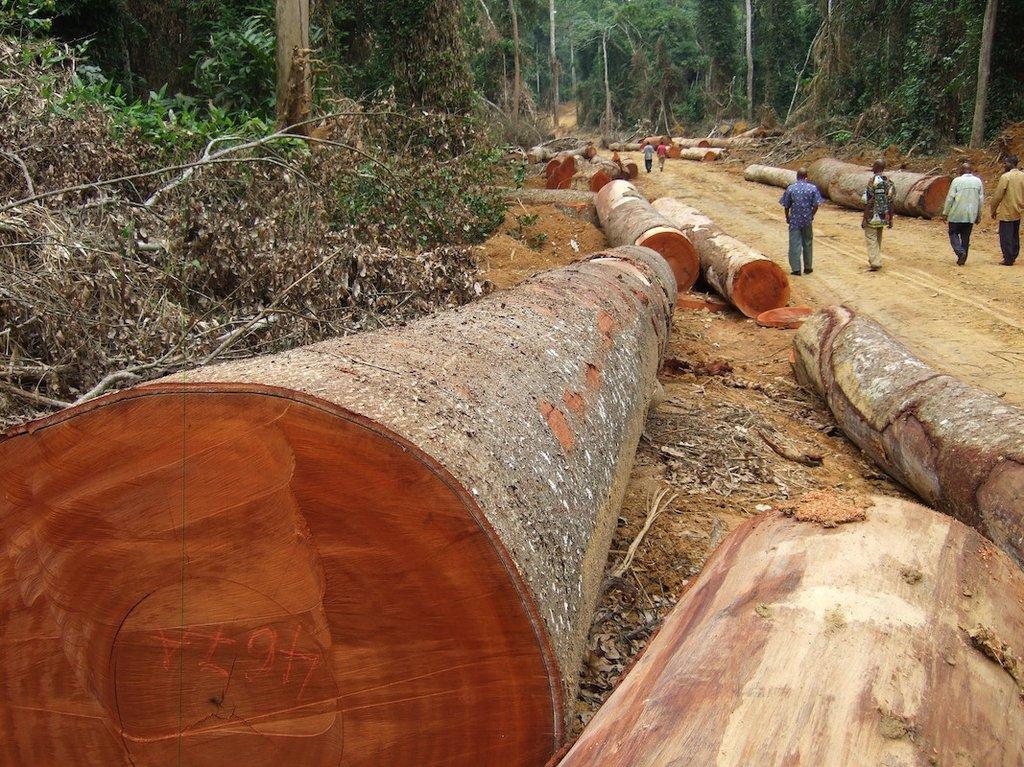 Kajo-Keji county authorities receive 'threats' from illegal loggers