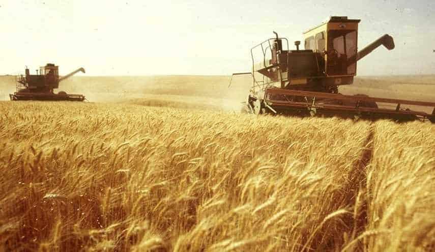 الحكومة :نمتلك مخزون من القمح يكفي حتي نهاية العام