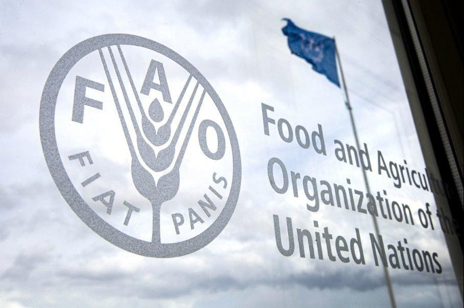 الفاو: 4 إجراءات استباقية لتجنب تفاقم أزمة الغذاء في 4 مناطق منها السودان