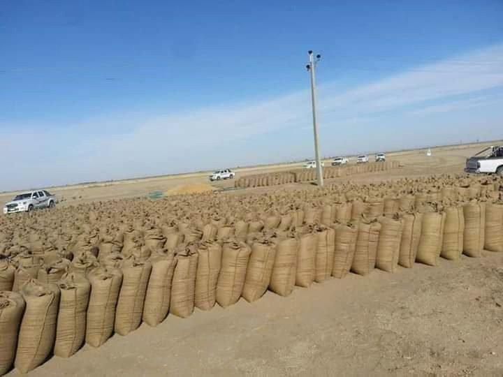 التجارة والتموين: وصول 10 آلاف طن قمح من الشمالية إلى الخرطوم