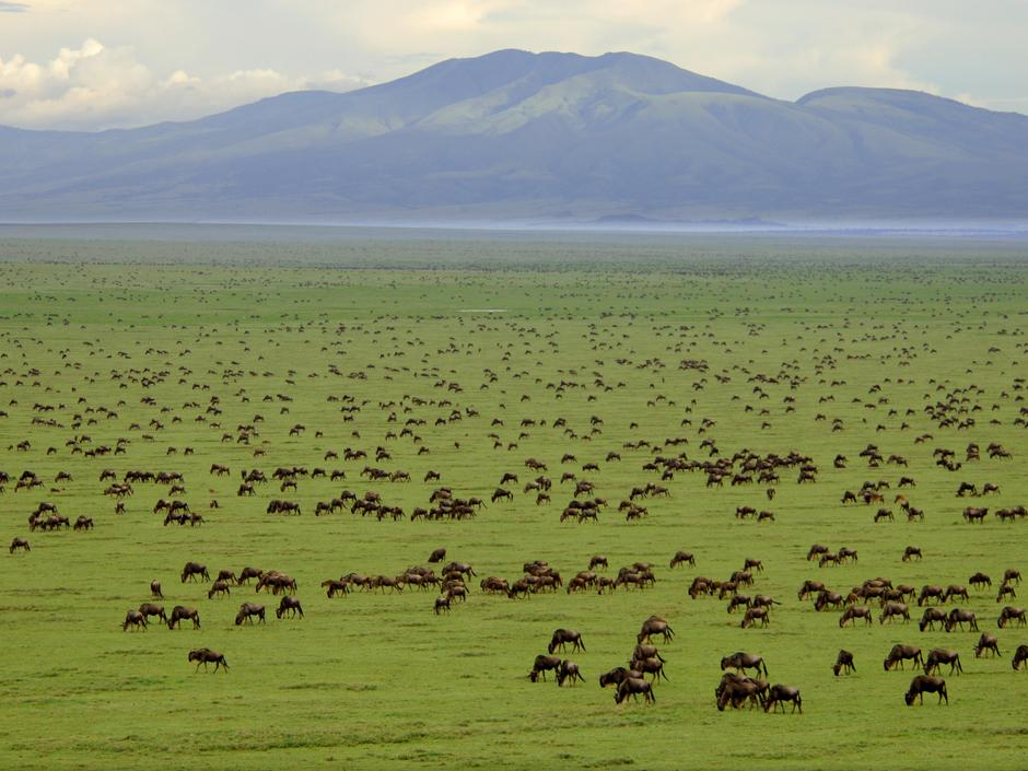 Land use plan out to protect Serengeti ecosystem