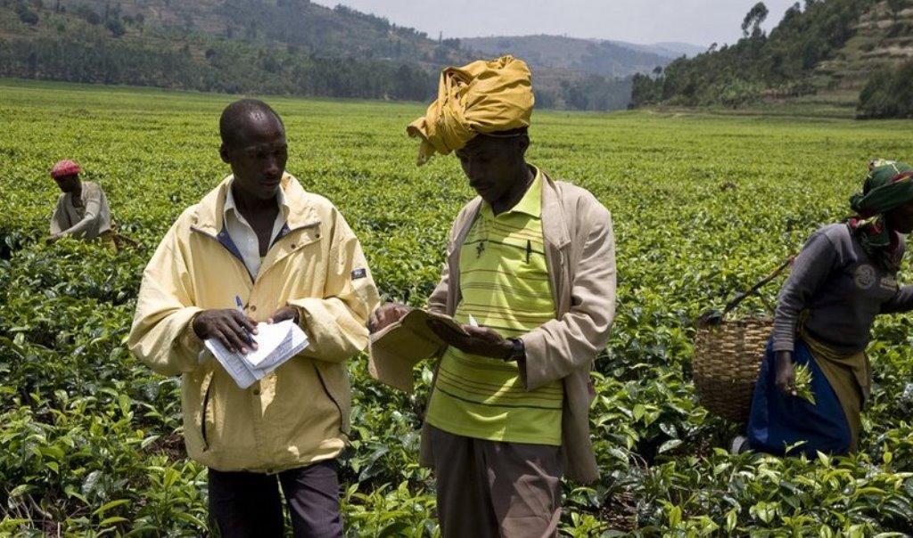 Bashe: Contract farming has ready market