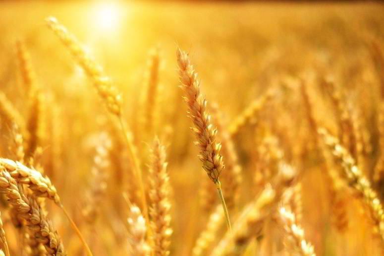 تونس اقتنت 142 الف طن من القمح اللين و50 الف طن من الشعير العلفي خلال اكتوبر 2020 لتغطية الطلب المحلي