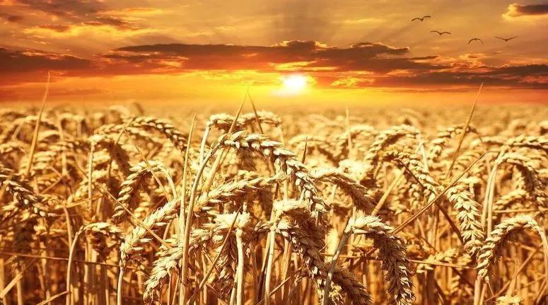 وزير الفلاحة: صابة الحبوب لموسم 2021 ستكون أفضل من الموسم الفارط وفق المؤشرات الاولية