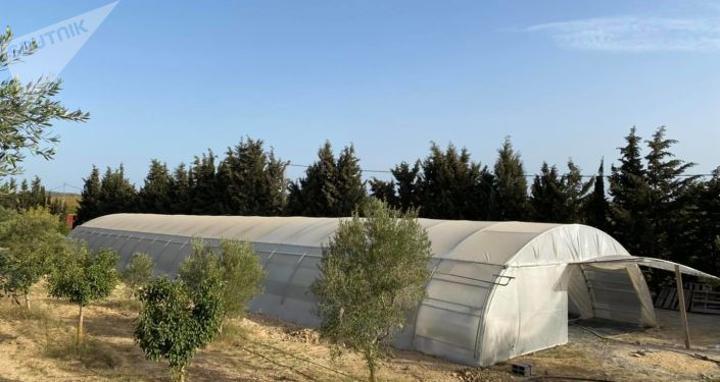 الزراعات المائية في تونس... تقنية جديدة لمقاومة شح المياه