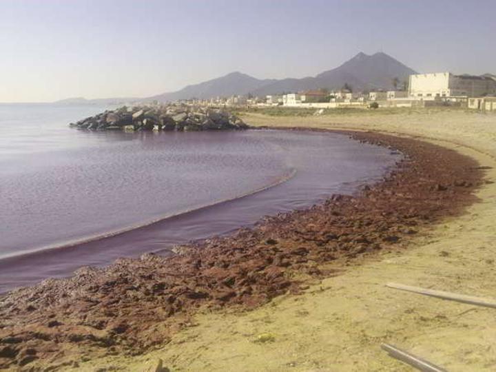 المنتدى الاقتصادي والاجتماعي يدعو الى دعم احتجاج سكّان الضاحية الجنوبيّة ضد إلقاء المياه الملوّثة في البحر