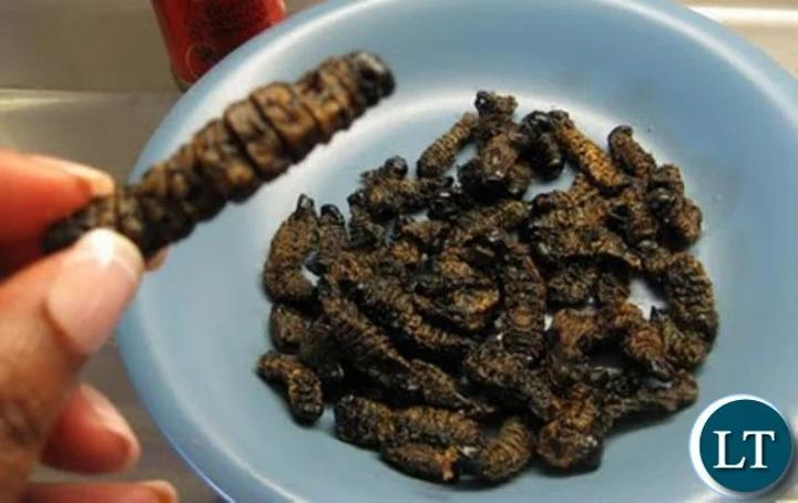 Traditional leaders institute measures to stop pupils from caterpillar harvesting