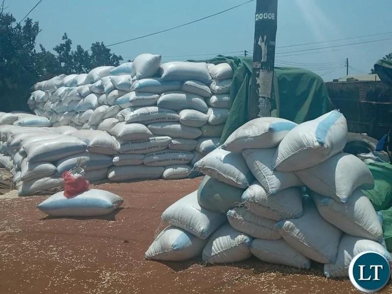 Maize at FRA depot go to waste