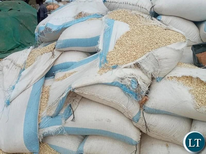 UPND is punishing innocent farmers by failing to provide FRA Grain Bags-Nakachinda