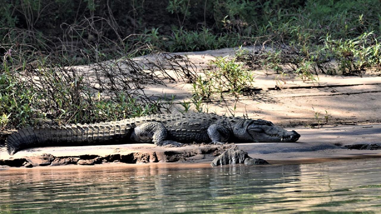 Crocodile Chops Off Ngundu Woman's Hand