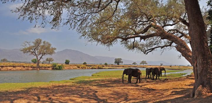 Elephant Kills South African Tourist In Mana Pools