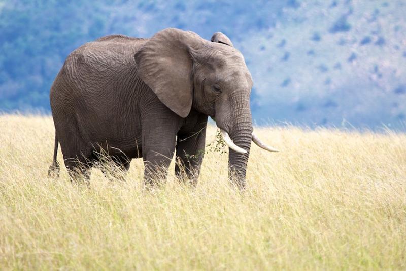 Elephant Kills South African Tourist In Zimbabwe's Mana Pools